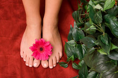 Pedicured feet Royalty Free Stock Image