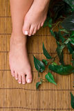 Pedicured feet Stock Images