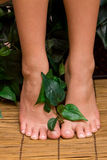 Pedicured feet Stock Image