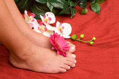 Pedicured feet Royalty Free Stock Images