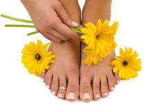 Pedicured Feet. Manicured hand and gerbera daisies Royalty Free Stock Photo
