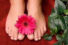 Pedicured feet Stock Photography
