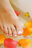 Pedicured feet and fresh rose Stock Photo