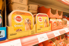 pedigree Fotografie Stock