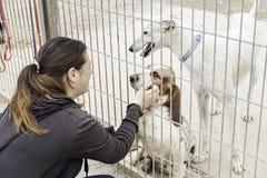 Pedigree abandoned animals. Dog cage kennel, adoption and animals Stock Photography