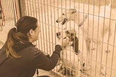 Pedigree abandoned animals. Dog cage kennel, adoption and animals Royalty Free Stock Photography