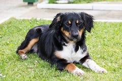 Pedigree animal do animal de estimação do cão engraçado Foto de Stock Royalty Free