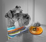 Pedigree dog paying by bitcoin cryptocurrency stock photos