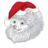 Pedigree dogs are drawn by hand. Spitz . Puppy in a Christmas hat . Stock Photos
