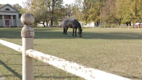 Grey Horse On Pasture. Pedigree horses black grey white brown color and spotted horse on pasture eating grass in slow motion dolly shot stock footage