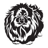 Pedigreed dog pekingese breed for tattoo and screen vector design Stock Photo