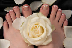 Pediküre mit einer weißen Rose Stockbild