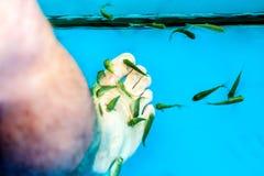 Pedikyrfiskbehållare Royaltyfri Fotografi