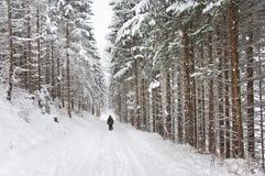 Pedone che cammina attraverso la foresta nell'inverno fotografia stock