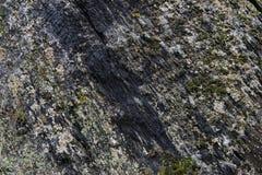 Pedra áspera com textura do musgo Imagem de Stock