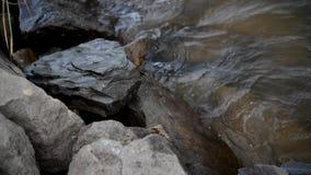 A pedra filme