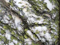 Pedra branca com pontos verdes Fotos de Stock Royalty Free