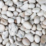 Pedra branca do conglomerado Imagem de Stock Royalty Free
