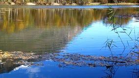 A pedra cai no lago, é círculos na água vídeos de arquivo