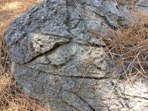 pedra Cinzento-marrom Fotografia de Stock Royalty Free
