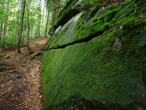 Pedra coberta com o musgo Fotografia de Stock Royalty Free