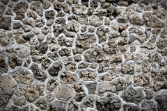 Pedra coral Imagem de Stock Royalty Free