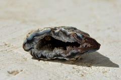 Pedra da ágata do geode Fotografia de Stock