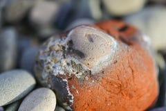 A pedra das cores na praia Imagem de Stock