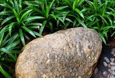 Pedra de Brown no jardim com grama verde Imagem de Stock Royalty Free