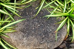 Pedra de Brown no jardim com plantas verdes Fotografia de Stock