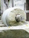 Pedra de moer imagem de stock royalty free
