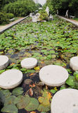 pedra de piso da lagoa foto de stock