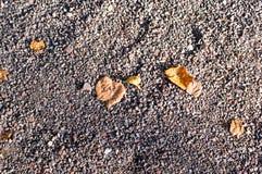 Pedra de Sandy moída com folhas de outono Fundo, textura Imagens de Stock Royalty Free
