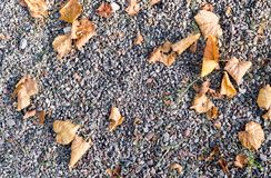 Pedra de Sandy moída com folhas de outono Fundo, textura Fotografia de Stock Royalty Free