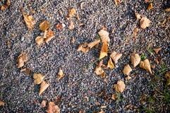 Pedra de Sandy moída com folhas de outono Fundo, textura Imagem de Stock