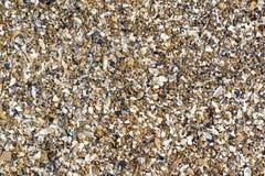 Pedra de Shell e do seixo Fotografia de Stock