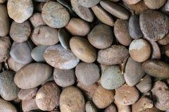 Pedra do conglomerado Imagens de Stock