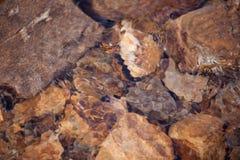 Pedra e água Fotos de Stock