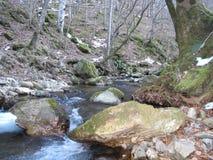 Pedra e árvores da natureza do rio fotografia de stock