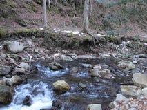 Pedra e árvores da natureza do rio fotos de stock royalty free