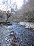 Pedra e árvores da natureza do rio foto de stock royalty free
