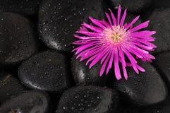 Pedra e flor fotos de stock