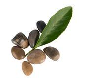Pedra e folha Fotografia de Stock