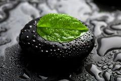 Pedra e folha do zen com gotas da água Fotos de Stock