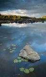 Pedra e lilys no lago Foto de Stock