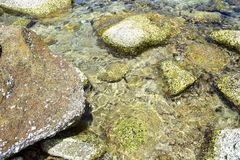 A pedra e o coral sob o mar claro na ilha de Koh Chang em Tailândia Foto de Stock Royalty Free