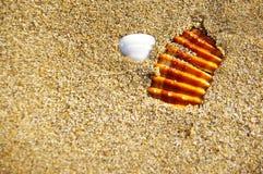 Pedra e shell na areia Fotografia de Stock