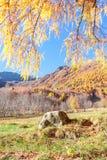 pedra e um panorama outonal Imagens de Stock Royalty Free