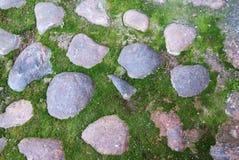 Pedra em Moss Background Imagem de Stock