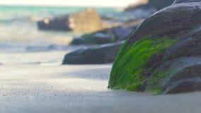 A pedra grande cobriu a alga verde na costa e em espirrar de mar ondas de água Alga musgoso na grande pedra em arenoso do mar filme